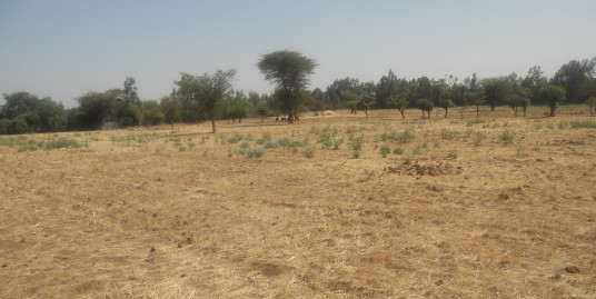 Freehold Land for Sale in Adama